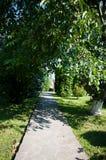 Arbres et buissons de plantes vertes un été chaud Image libre de droits