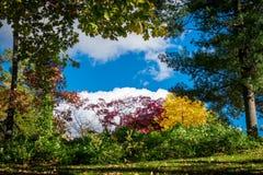 Arbres et buissons montrant leur feuillage d'automne multicolore, devant un beau ciel bleu et des nuages blancs sur a images stock