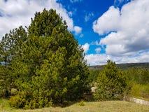 Arbres et buissons verts sur une montagne avec le ciel bleu image stock