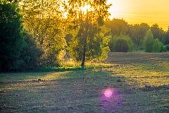 Arbres et champ oranges de lumière de coucher du soleil image stock