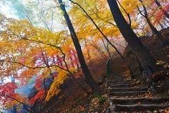 Arbres et chemin d'automne en brume photos stock