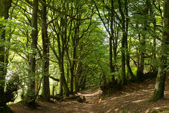 Arbres et chemin de région boisée en Angleterre Images stock