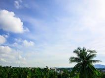 Arbres et ciel bleu Images stock