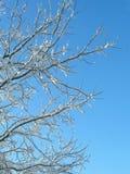 arbres et ciel Hoar-givrés Photos stock