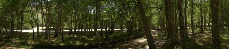 Arbres et clairières au ` Ametade de Covao d Serra DA Estrela, Portugal Photographie stock