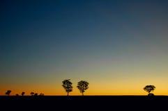 Arbres et coucher du soleil photo stock