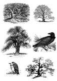 Arbres et ensemble d'oiseaux de clipart (images graphiques) photos stock