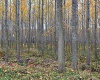 Arbres et feuilles de paysage d'automne dans la forêt photos stock