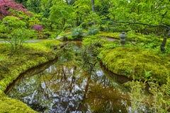 Arbres et feuilles pittoresques et colorés de jardin japonais Photo stock
