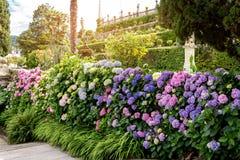 Arbres et fleurs Photo libre de droits