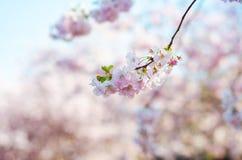 Arbres et fleurs de fleur en parc Belle vue de nature de ressort avec des personnes Arbres et lumière du soleil Scène de jour ens image stock