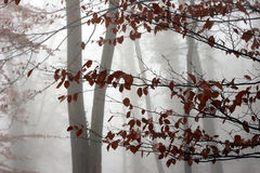 Arbres et forêt images stock