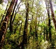 Arbres et forêt verts Image libre de droits