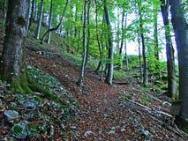 Arbres et forêts à feuilles caduques dans l'automne tôt dans la gamme de montagne d'Alpstein et dans la région d'Appenzellerl photo stock