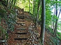 Arbres et forêts à feuilles caduques dans l'automne tôt dans la gamme de montagne d'Alpstein et dans la région d'Appenzellerl photo libre de droits