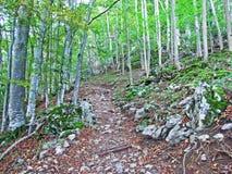 Arbres et forêts à feuilles caduques dans l'automne tôt dans la gamme de montagne d'Alpstein et dans la région d'Appenzellerl image stock