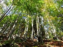 Arbres et forêts à feuilles caduques dans l'automne tôt dans la gamme de montagne d'Alpstein et dans la région d'Appenzellerl image libre de droits
