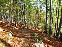 Arbres et forêts à feuilles caduques dans l'automne tôt dans la gamme de montagne d'Alpstein et dans la région d'Appenzellerl photographie stock
