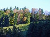 Arbres et forêts de mélanges dans la gamme de montagne d'Alpstein et dans la région d'Appenzellerland photos libres de droits
