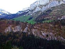 Arbres et forêts de mélanges dans la gamme de montagne d'Alpstein et dans la région d'Appenzellerland images libres de droits