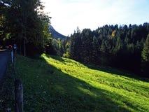 Arbres et forêts de mélanges dans la gamme de montagne d'Alpstein et dans la région d'Appenzellerland photographie stock libre de droits