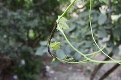 Arbres et fourmis dans le collo Image libre de droits