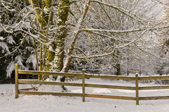 Arbres et frontière de sécurité de corral de neige image stock