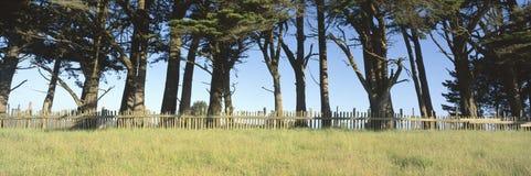 Arbres et frontière de sécurité en bois, photographie stock