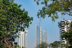 Arbres et gratte-ciel verts sur le fond clair de ciel bleu photographie stock libre de droits