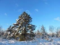 Arbres et herbe de Milou dans le pré en hiver, Lithuanie image libre de droits