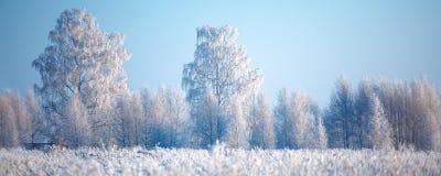 Arbres et herbe givrés contre un ciel bleu Photographie stock