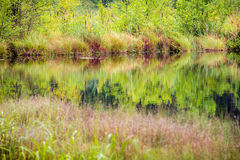 Arbres et herbe, réflexion de lac image libre de droits