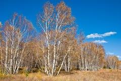 Arbres et herbes d'or sous le ciel bleu Image stock