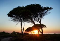 Arbres et herbes de silhouette pendant le temps de coucher du soleil Photographie stock