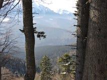Arbres et la montagne Photographie stock libre de droits