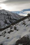 Arbres et la montagne couverte de neige photos libres de droits