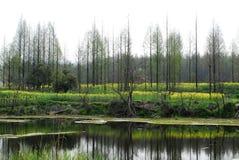 Arbres et lac photos stock