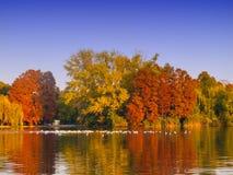 Arbres et lac colorés d'automne Photographie stock