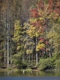 Arbres et lac d'automne Photographie stock