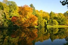 Arbres et lac d'automne photos libres de droits