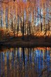 Arbres et lac d'automne Photos stock