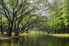Arbres et lac verts à Changhaï gongqing Forest Park en automne photo libre de droits
