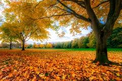 Arbres et lames d'automne image stock