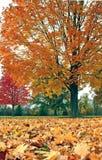 Arbres et lames d'automne Image libre de droits