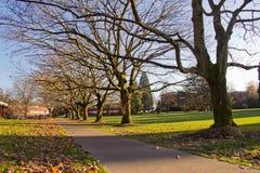 Arbres et lames d'automne sur le campus d'université Images libres de droits