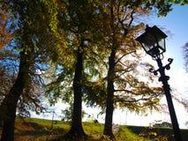 Arbres et lanterne Image libre de droits