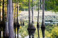 Arbres et leur réflexion sur l'eau Photographie stock libre de droits