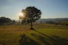 Arbres et lumière du soleil dans la forêt image libre de droits