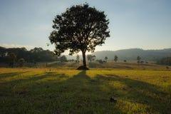 Arbres et lumière du soleil dans la forêt photos stock