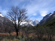 Arbres et montagnes Photographie stock